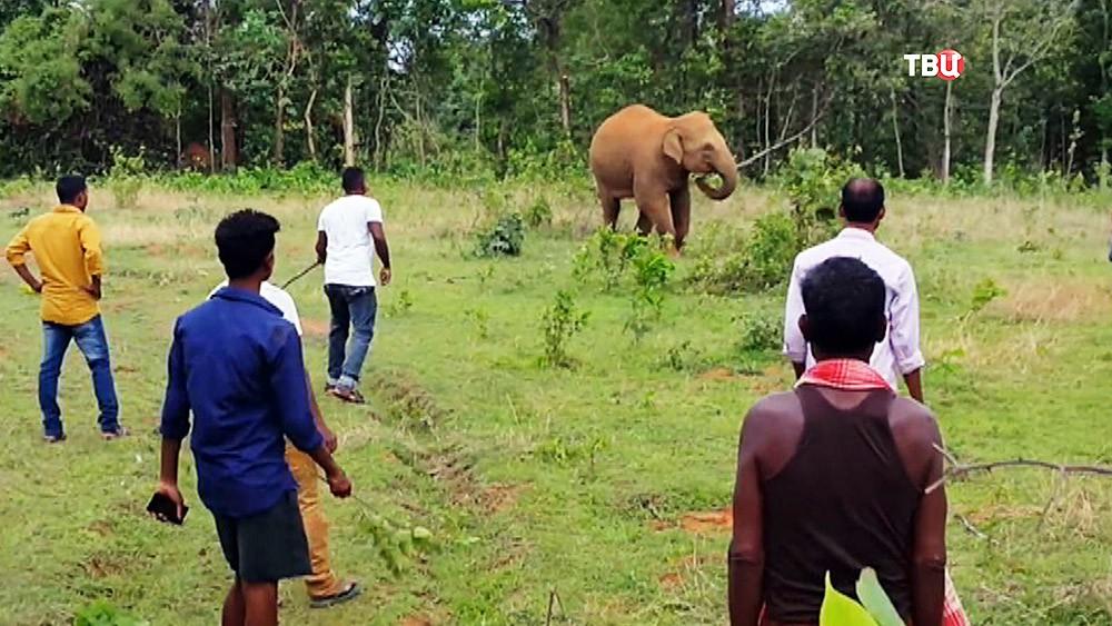 Люди окружают слона