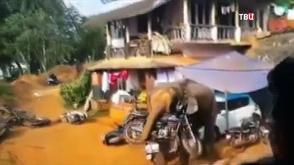Слон крушит поселок в Индии