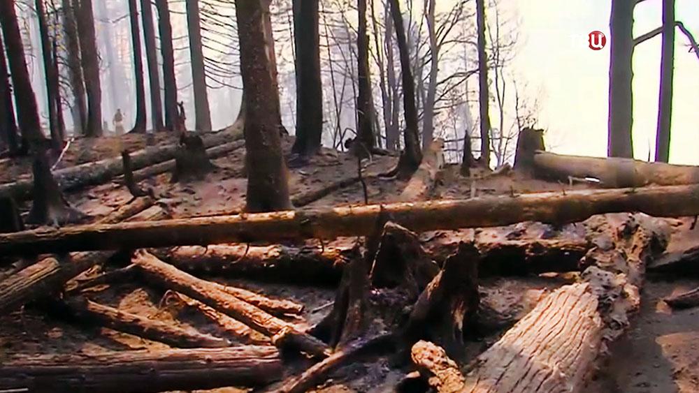 Лесной пожар в Грузии