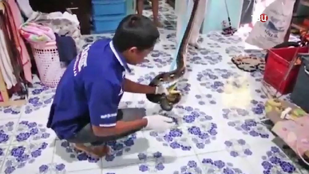 Представители ветеринарной службы ловят змею