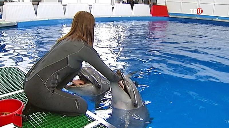 Тренеровка дельфинов