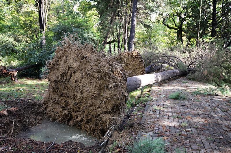 Деревья, сломанные ураганом в городе Сочи