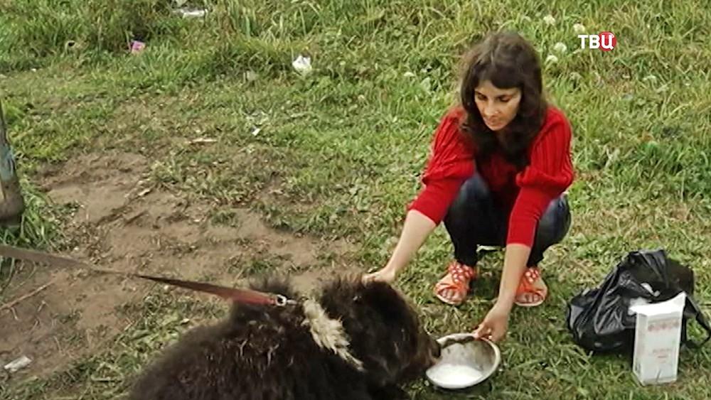 Женщина кормит голодного медвежонка