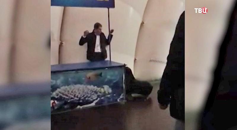 Морской котик поймал хулигана