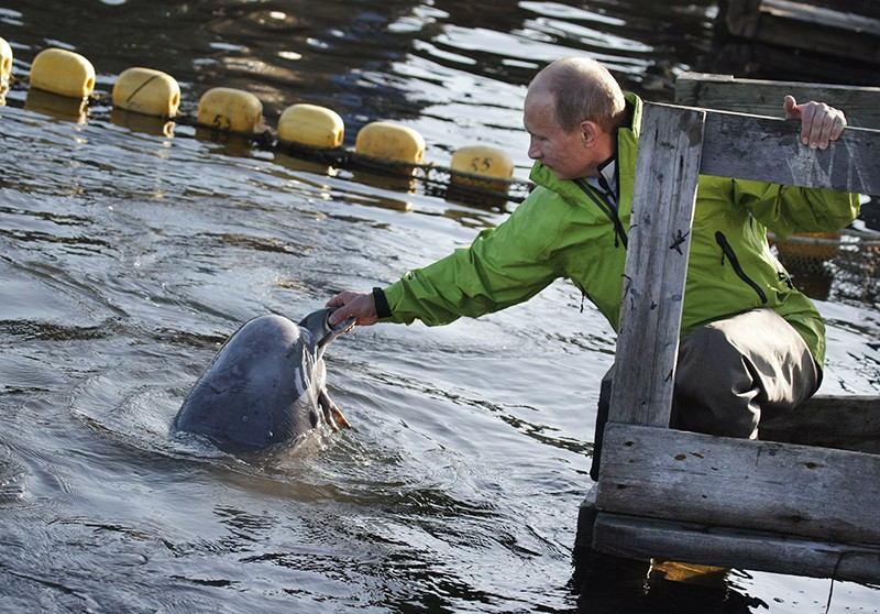 Владимир Путин кормит белух, содержащихся в вольерах на острове Чкалова в Охотском море