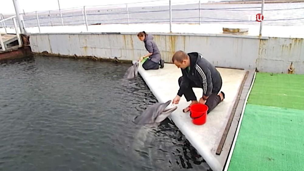 Дельфины реабилитационного центра для морских животных