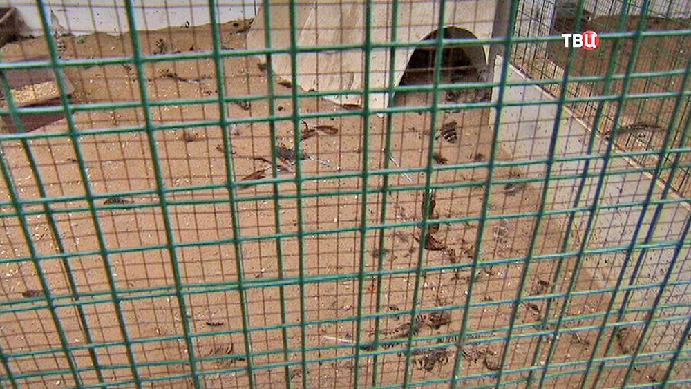 Место убийства фазанов