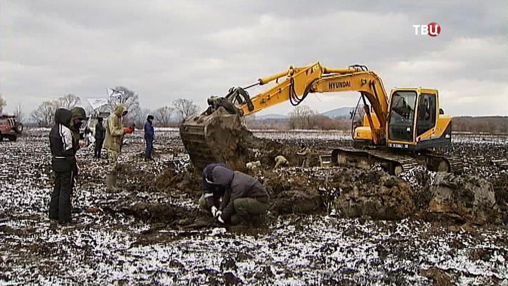 Подъем бомбардировщика времен войны из болота в Приморье