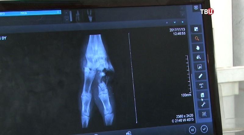 Снимок ноги лосенка