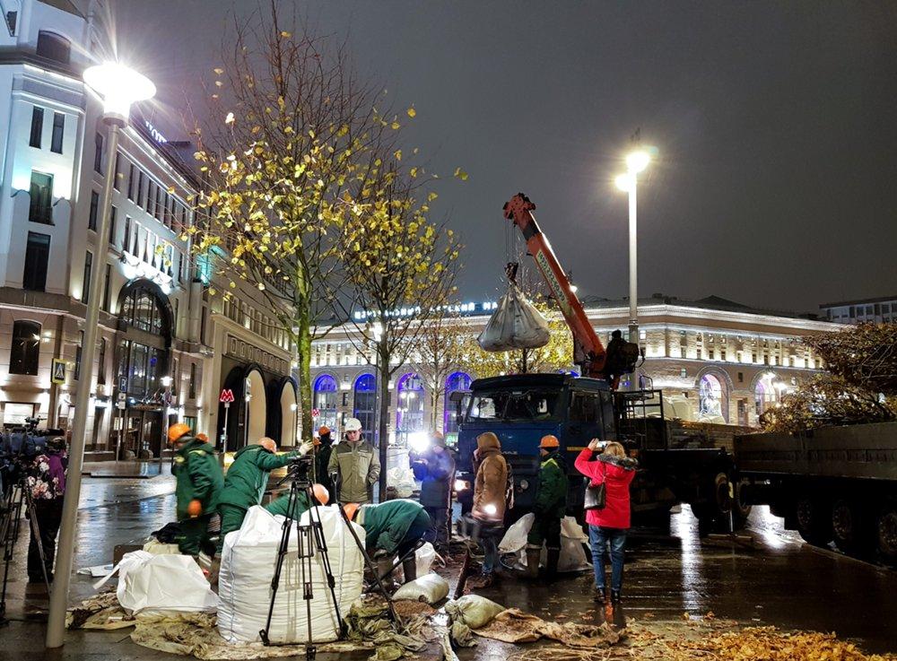 Высадка деревьев на Новой площади