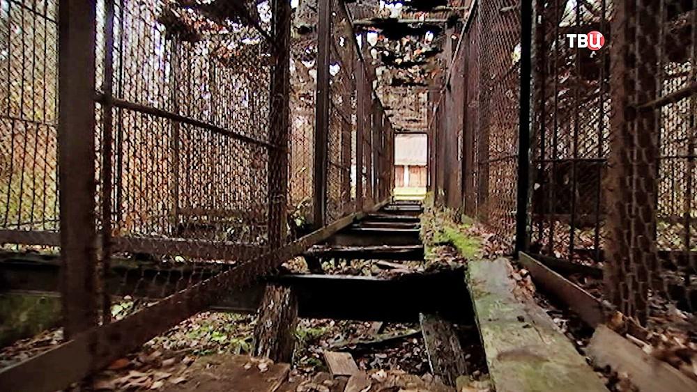 Старые клетки в кинозверобазе в Леоново