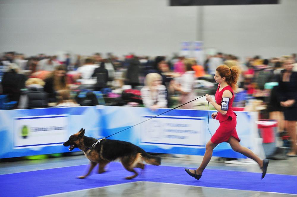 Международная выставка собак в Москве