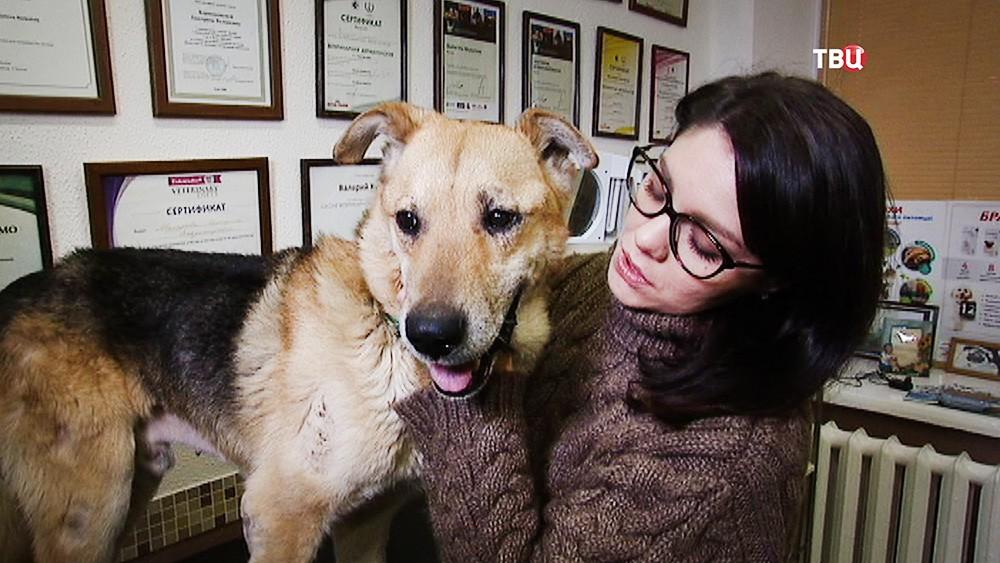 Сбитый бездомный пес в ветеринарной клинике