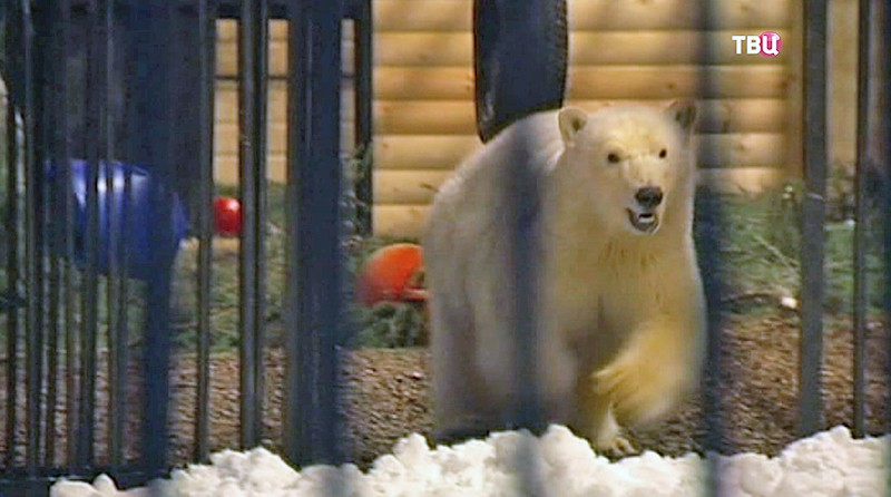 Медвежонок Снежинка