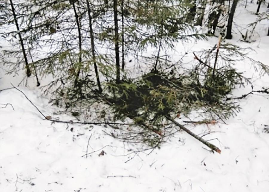 Место ночевки потерявшихся в лесу подростков