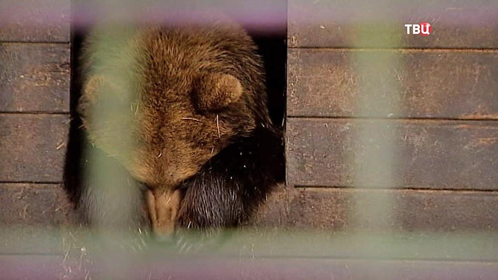 Медведь в вольере
