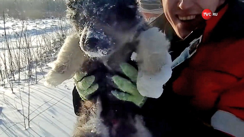 Жители Ямала спасли замерзающего щенка