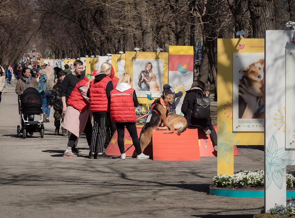 """Площадка фестиваля """"Пасхальный дар"""", посвященная брошенным животным"""