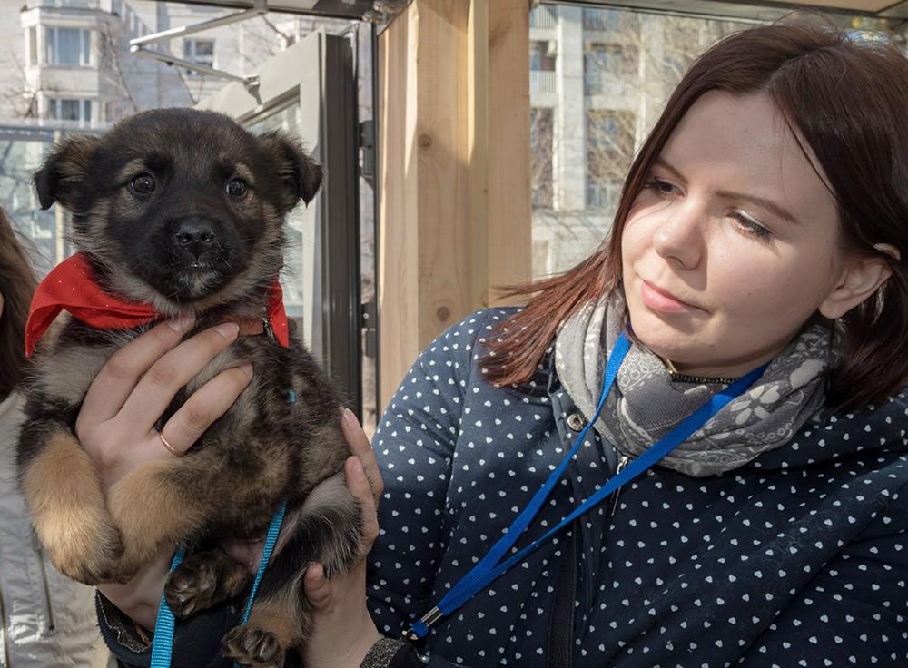 Волонтёры и брошенные животные