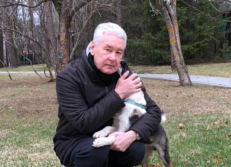 Мэр Москвы Сергей Собянин с собакой