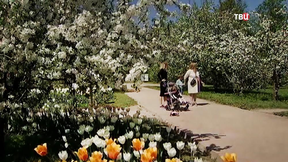 Цветение яблонь в парке