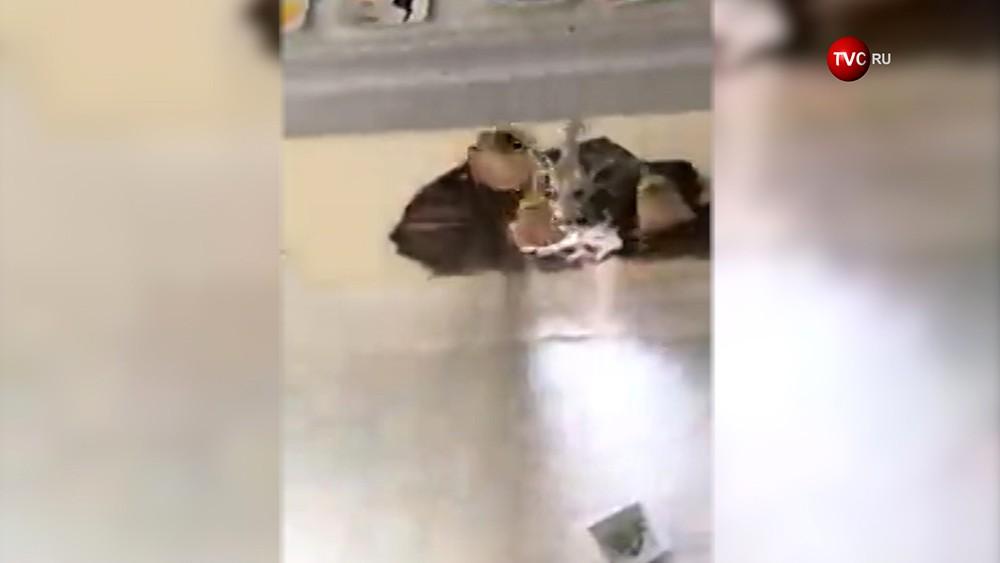 Обрушение потолка в школе