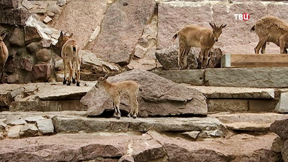 Дагестанские туры в зоопарке