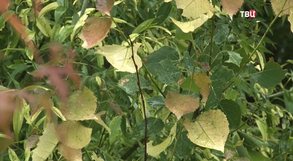 Погибшие растения в Хабаровском крае