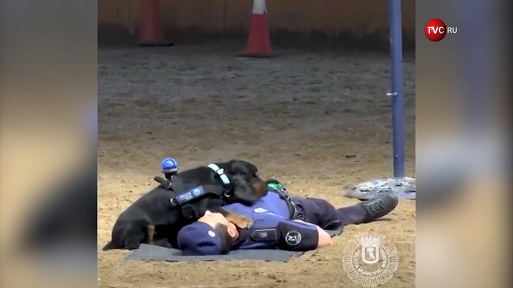 Тренировка кинологического подразделения полиции Мадрида