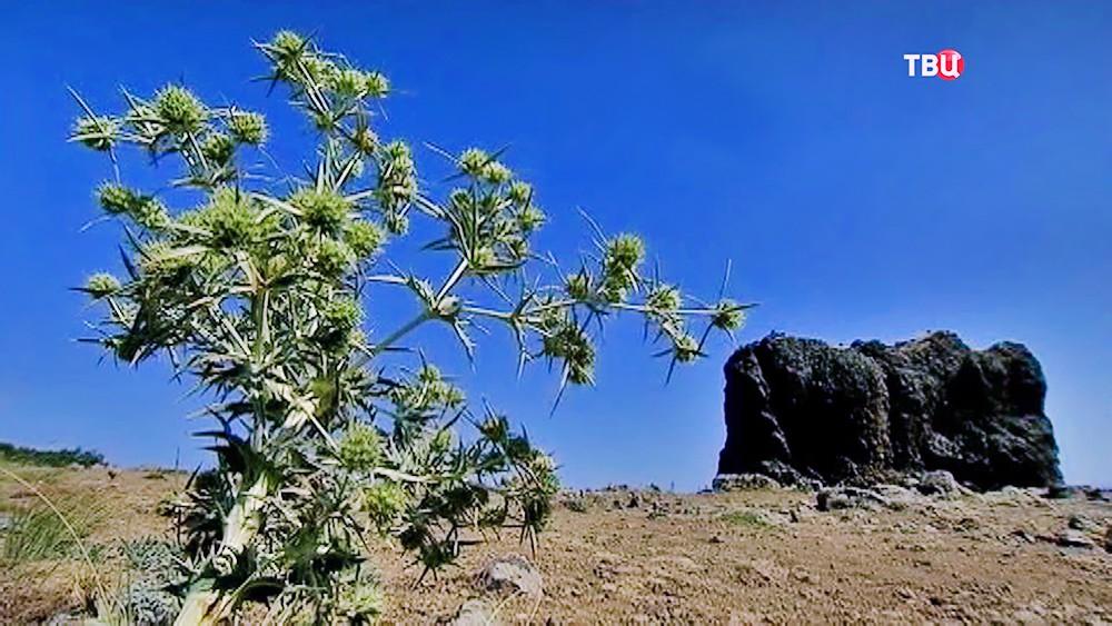 Гора Кара-Даг в Крыму