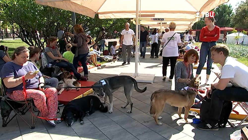 Благотворительный фестиваль для бездомных животных
