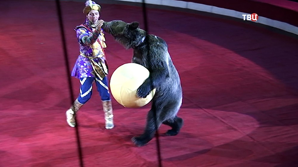 Выступление артистов в цирке
