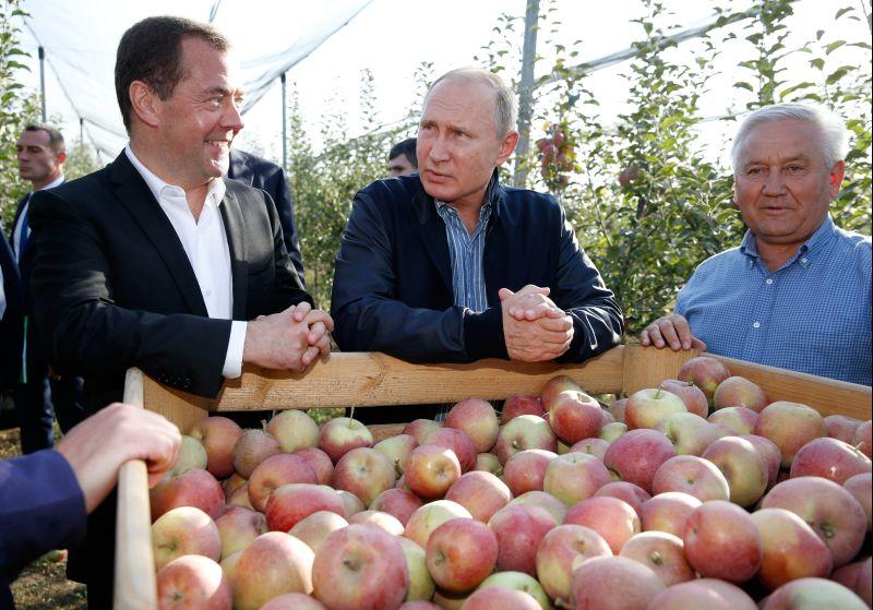 Владимир Путин и Дмитрий Медведев во время осмотра яблоневых садов в Ставропольском крае
