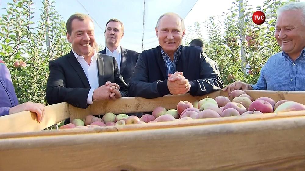 Владимир Путин и Дмитрий Медведев осматривают урожай яблок