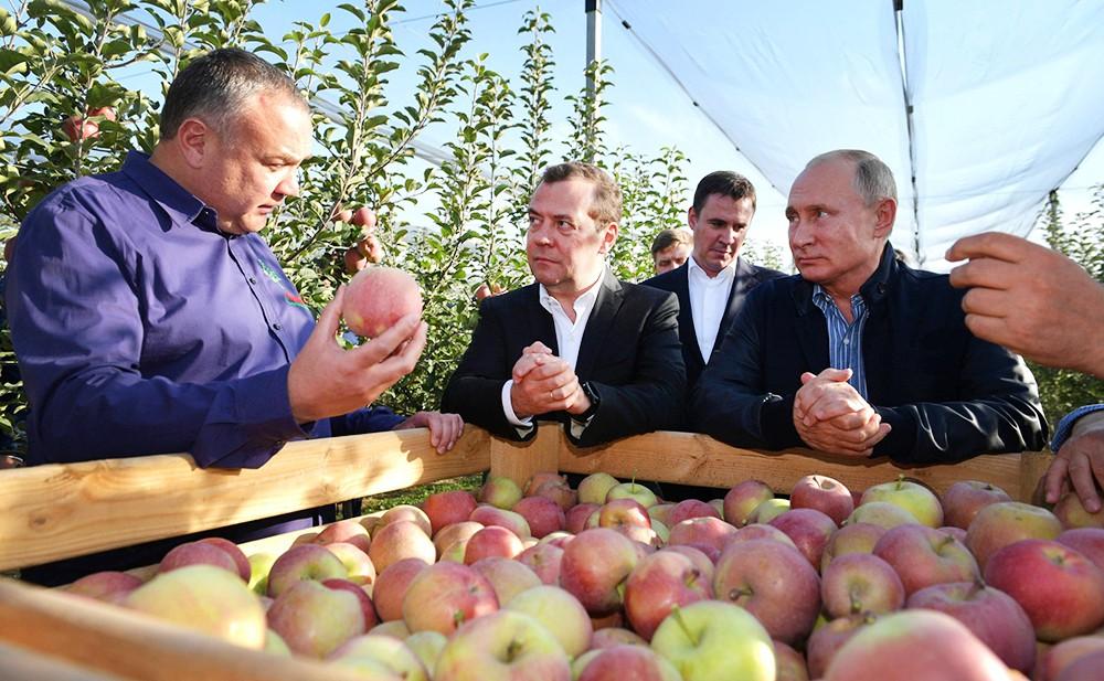 Владимир Путин и Дмитрий Медведев оценили урожай яблок