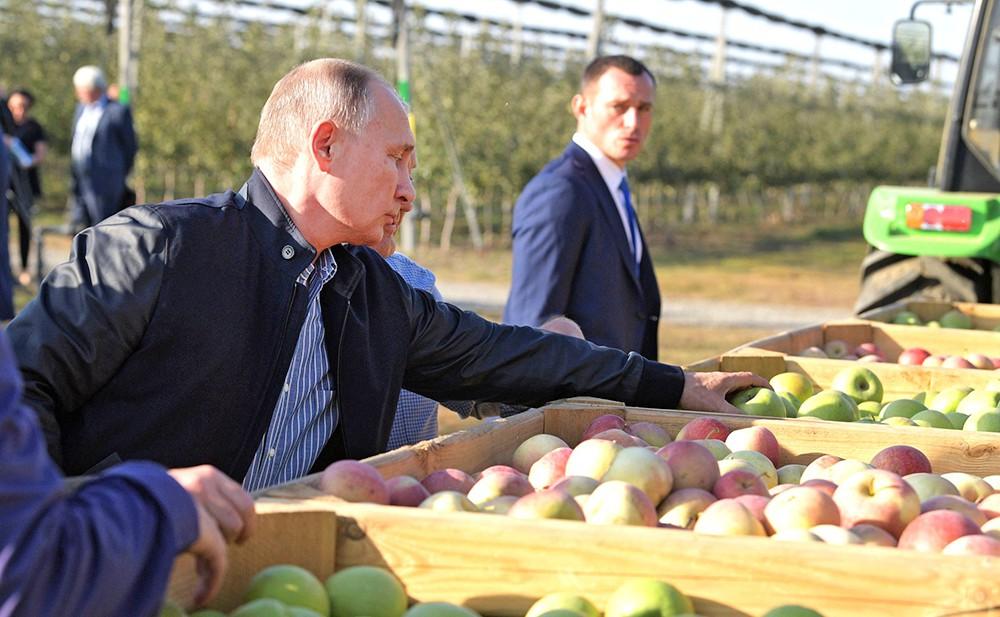 Владимир Путин посетил сельхозпредприятие