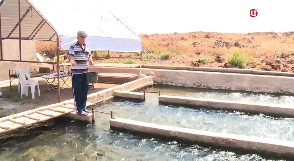 Рыбная ферма в Сирии