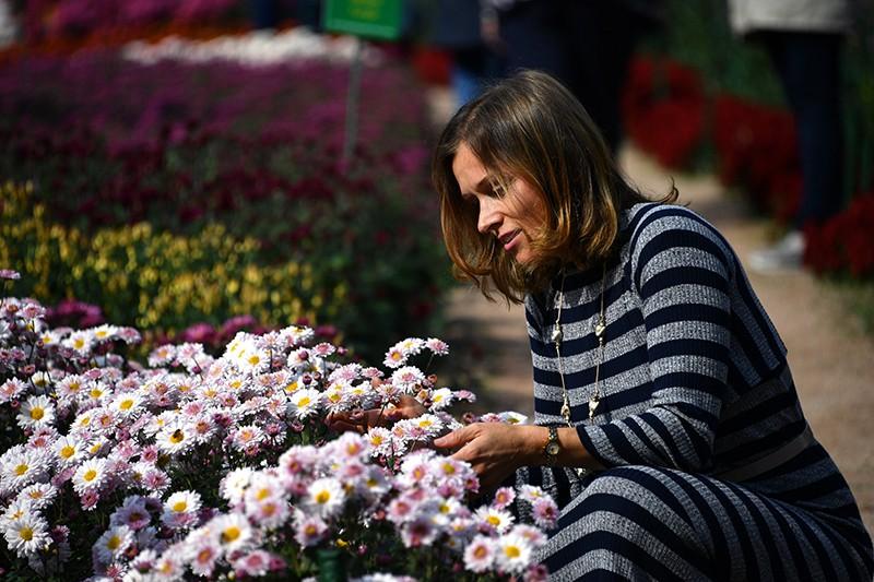 """Выставка хризантем """"Осенний блюз"""" в Никитском ботаническом саду"""