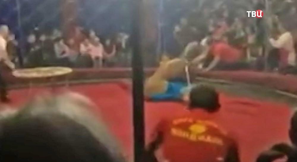 Нападение львицы на 4-летнюю девочку в кубанском цирке