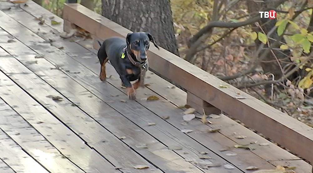 Собака гуляет в парке