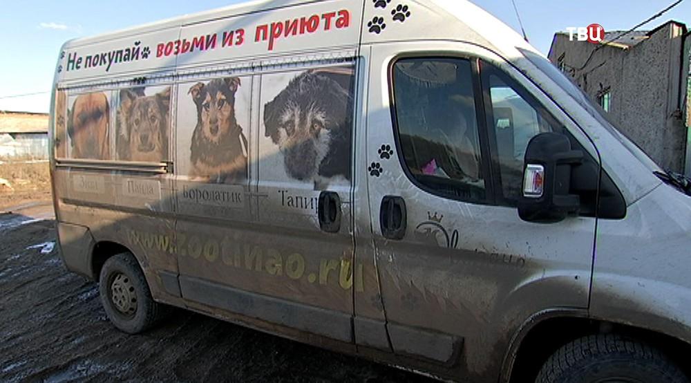 Приют для собак в Ермолове