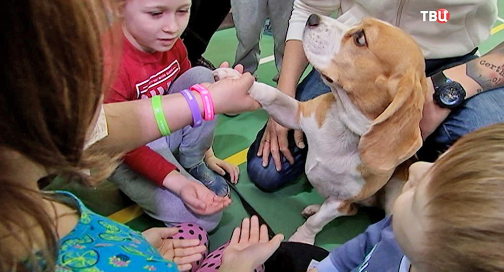 Дети играют с собакой