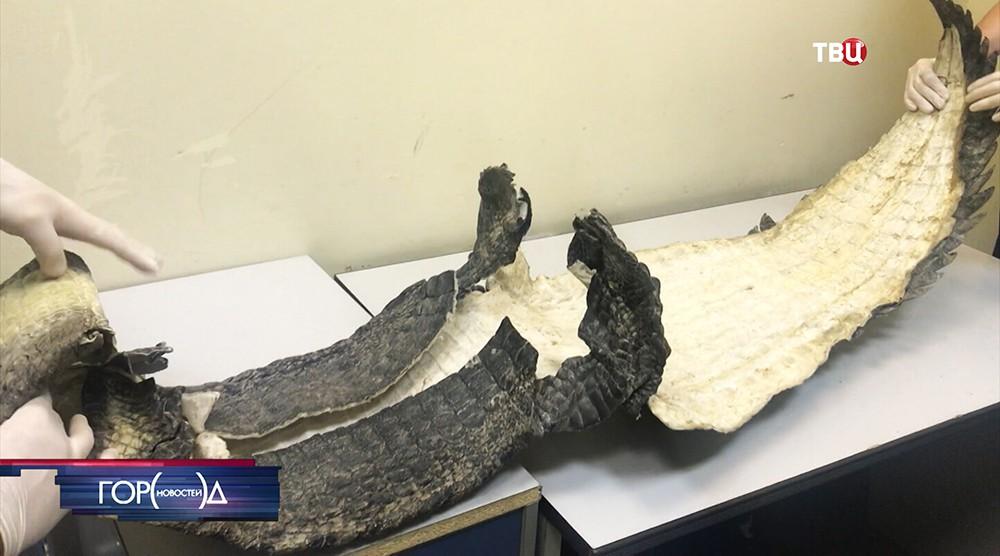 Шкура нильского крокодила