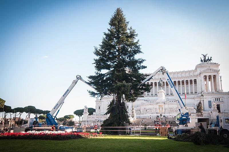 Рождественская ель в Риме