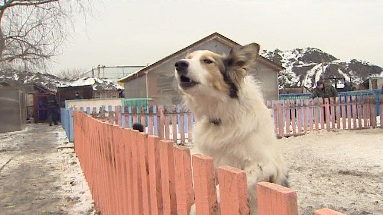 Собака около сгоревшего приюта