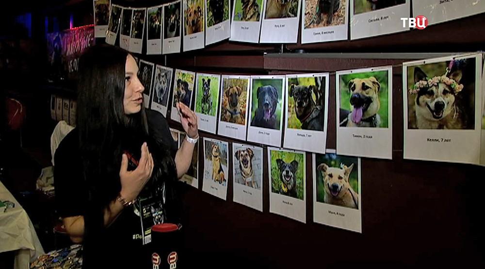 """Благотворительный проект """"Рок в защиту животных"""""""
