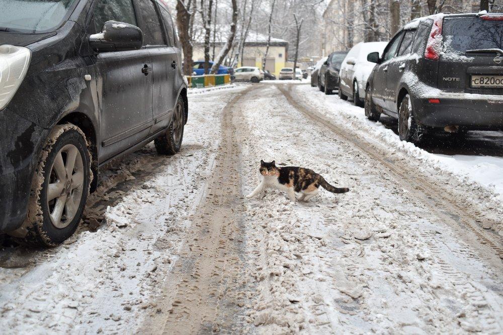 Снег в Москвы