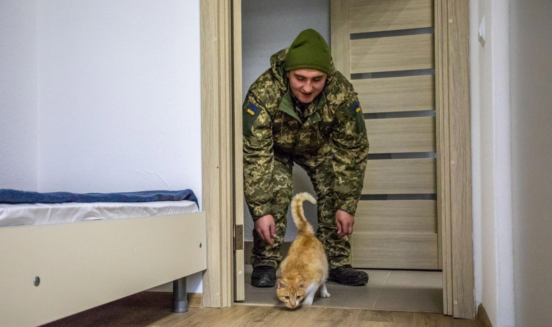 Кот, опубликованный в Twitter Порошенко