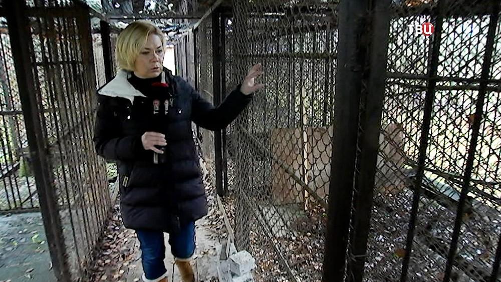 Корреспондент Ольга Стрельцова