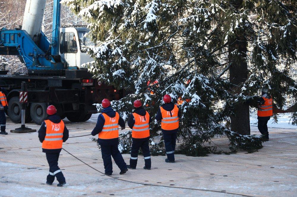 Церемония рубки главной новогодней ели России